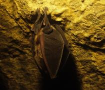 Una notte dedicata all'incredibile mondo dei pipistrelli